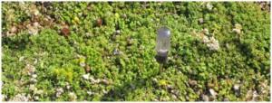 light indicator on green roof